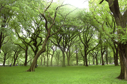 diagnostic soin expertise arboricole brins d 39 herbes services france. Black Bedroom Furniture Sets. Home Design Ideas